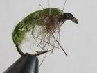 Slate Green Bug
