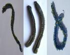 Tungsten Seeringelwurm / Borstenwurm / Borsteorm blue/green