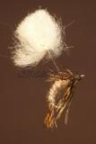 Klinkhammer Parasol Hare´s Ear pearl rib