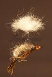 Klinkhammer Parasol Hares Ear Emerger