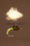 Klinkhammer Parasol Olive Emerger
