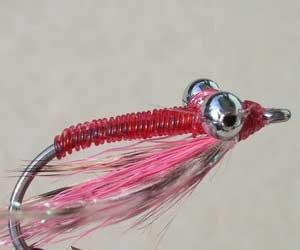 Bonefish / Tarpon